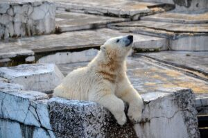 北極 南極 寒い どっち