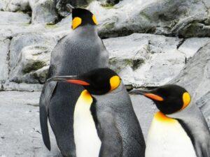北極 南極 寒い どっち,北極 南極 違い