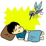 蚊,寿命,家の中