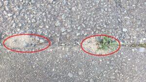 アリの巣コロリ,効果,時間